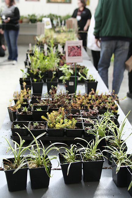 Rows+of+plants+of+all+variations+were+for+sale+at+the+event.+When+one+tray+was+emptied%2C+volunteers+carried+more+in+from+outside+in+a+steady+stream+of+greenery.+