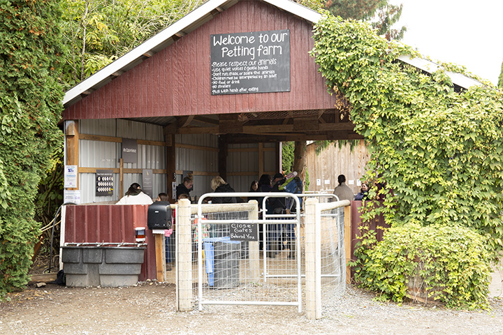 Harvest+activities+include+a+petting+farm+at+Swans+Trail+Farms.