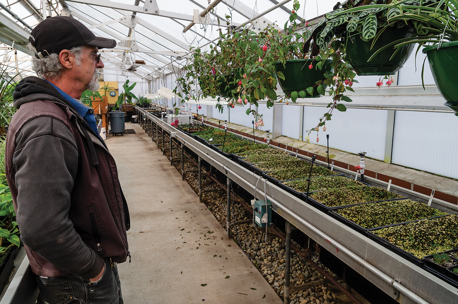 Grounds Department lead John Syson, surveys flowering plants and seedlings that will get transplanted outside the greenhouse in the springtime.