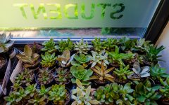 Midterms Succ: Student LIFE Hosts Succulent Planting Event Monday, May 13
