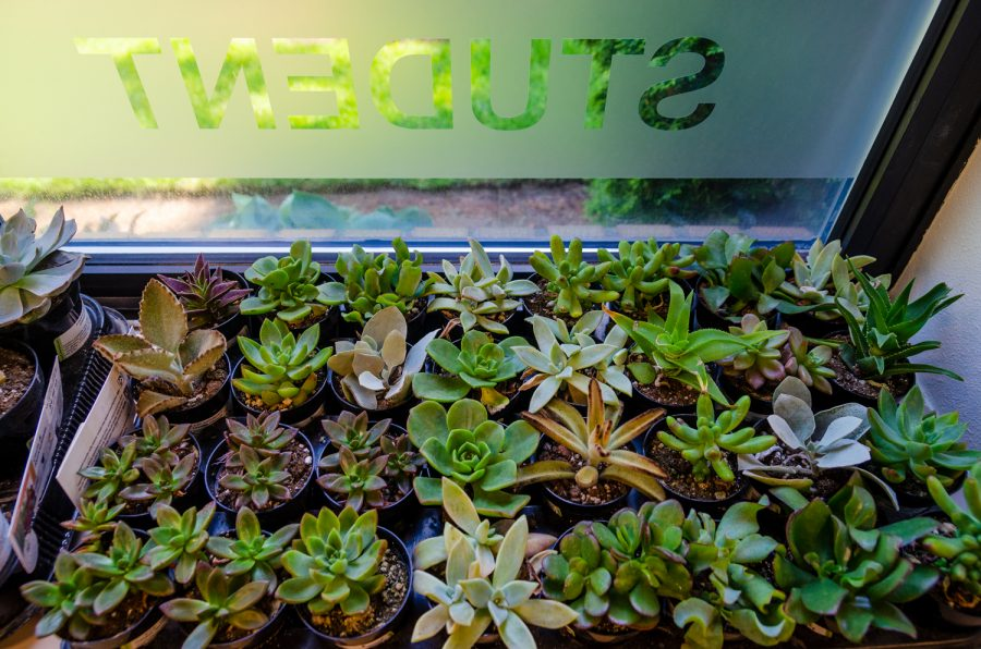 Hundreds+of+succulents+in+the+Student+LIFE+office+are+ready+to+be+planted+during+the+Midterms+Succ+event.%0A