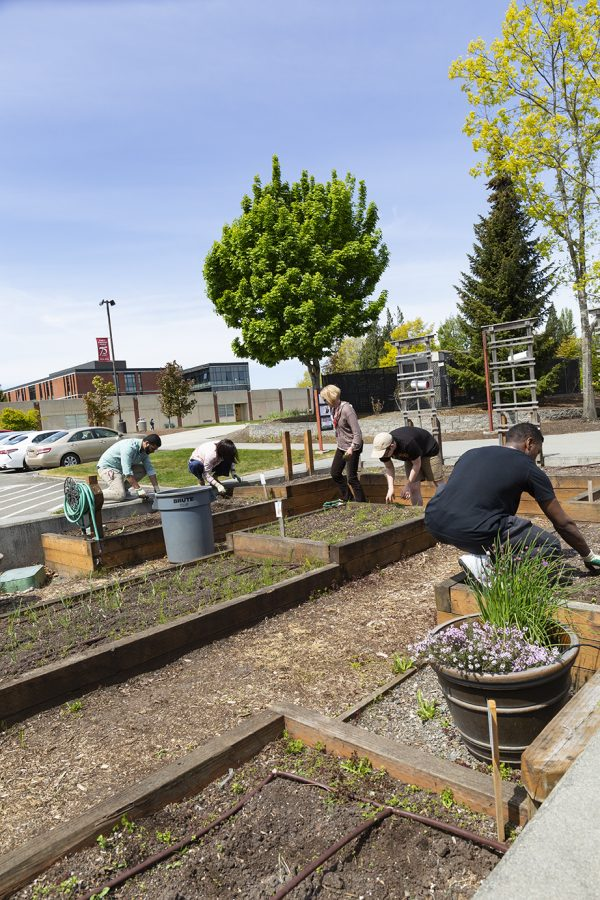 Students+can+volunteer+in+the+campus+gardens+over+spring+and+fall+quarters.