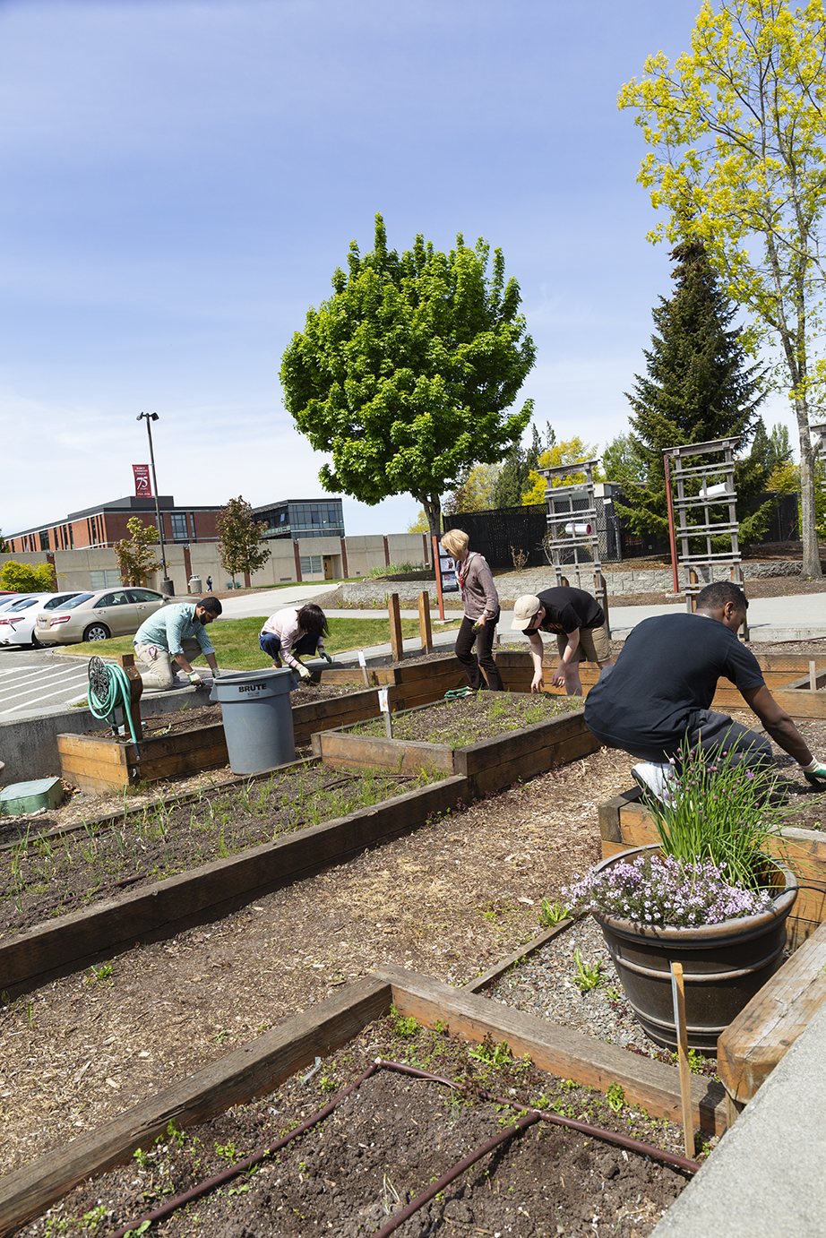 Students can volunteer in the campus gardens over spring and fall quarters.