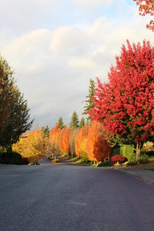 Autumn brings stunning colors to trees as their leaves change and begin to fall.