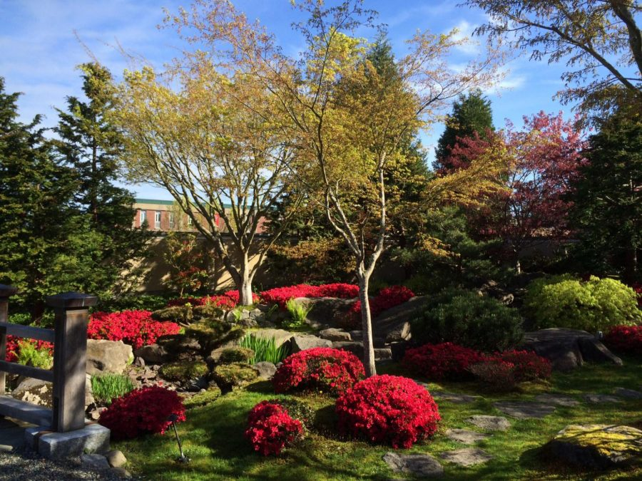 The serene Japanese garden at the JCRC.