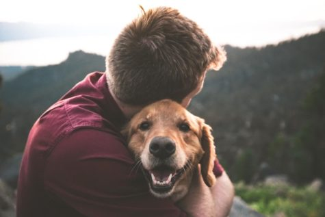 How Our Pets Relieve Stress